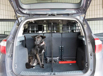 In a car boot, the transit connect partition is installed and the boot is divided into two parts and a dog in it.